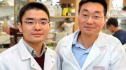 Yale Researchers Reveal Pathway of Resistance to Viral Infections in the Gut