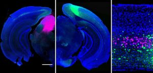Yale Scientists Track How Brain Routes Visual Signals
