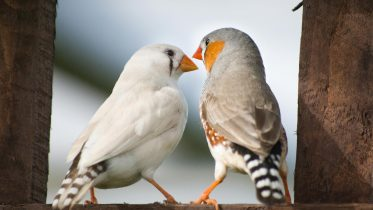 New Study of Species That Mate for Life Shows How Investing in Love and