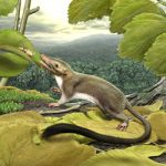 Ancestor of Placental Mammals