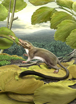 ancestor-of-placental-mammals