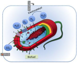 bacterium uses the hydrogen as an energy source to take in carbon dioxide and convert it to a biofuel