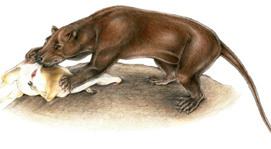 A restoration of the large bear dog Amphicyon at a kill. Spain's Magericyon anceps was a relative of this imposing carnivore. Credit: Charlene Letenneur, from Argot, 2010
