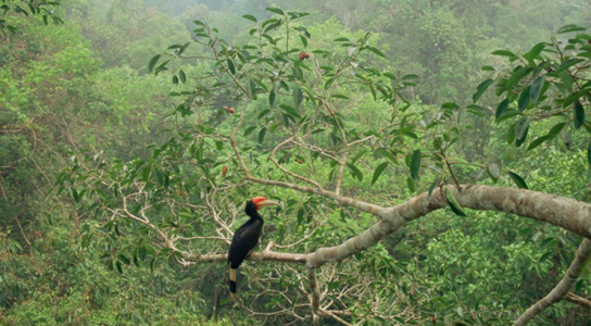 biodiversity-tropical-climate