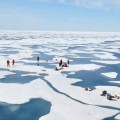 biologists find massive algal blooms under Arctic sea ice