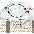 brain activity shows strong oscillations in a certain set of frequencies called the theta-band