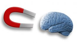 brain and magnet