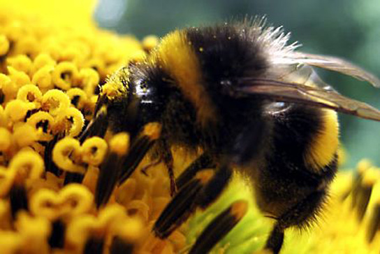 Common Pesticides Are Severely Affecting Bees