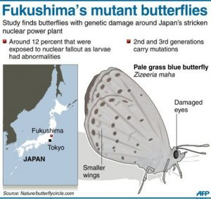 butterfly-infographic-mutated