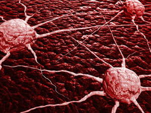 cancer cells are not created equal