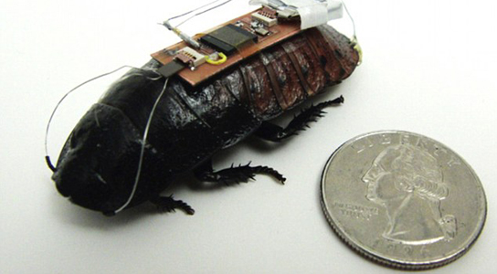 cockroach-biobot-remote-control