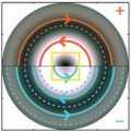 comparison of electron beams with parallel and antiparallel spin and vortex orientation