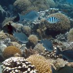 coral death by a deadly chain reaction