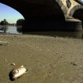 dead-fish-europe-waterways