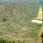 deforestation-argentina-independent