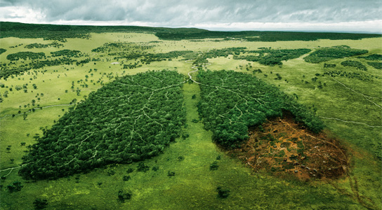 Humans Implicated In Africa S Deforestation 3 000 Years Ago