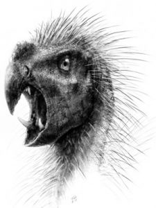 drawing-of-pegomastax-africanus