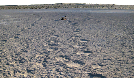 footprints reveal ancient origins of elephants