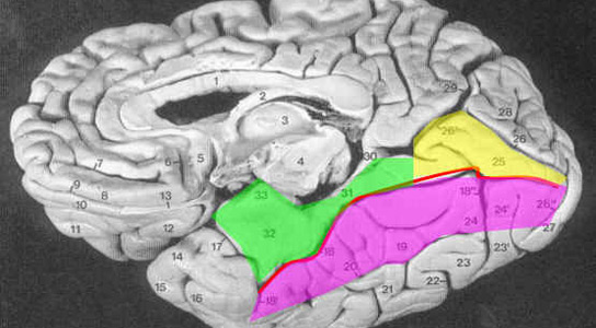 Mapping the Human Brain\'s Facial Recognition System