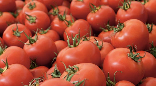 Genetically Modified Tomatoes Counteract Heart Disease