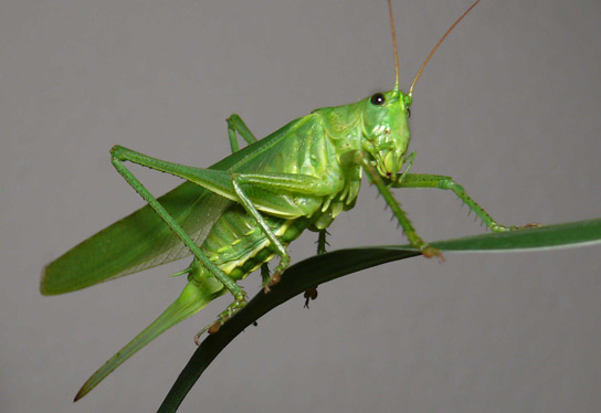 Fear of Predators in Grasshoppers Slows Plant Decay in ...
