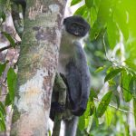grizzled-langur-monkey-tree-eric-fell