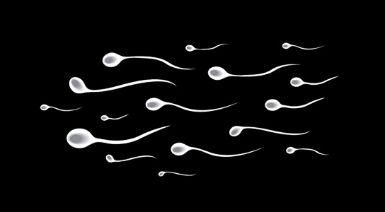 Daily production of sperm truely