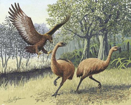 haasts-eagle-two-moa