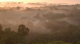 how aerosol particles form in the Amazon