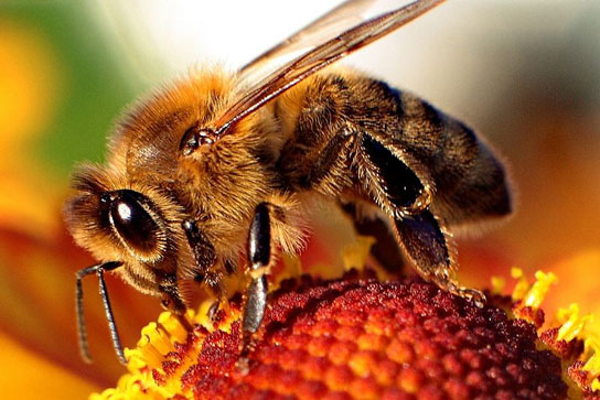 insecticide linked to die-off of honeybees