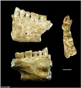 jaw-lonche-neolithic