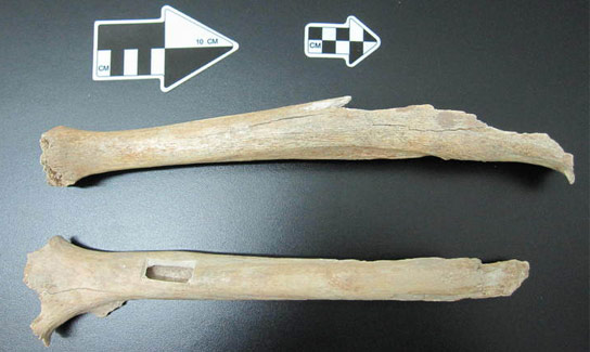 leg-of-the-early-modern-human-from-Tianyuan-Cave