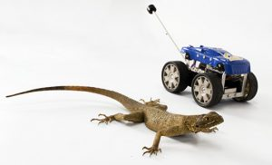Lizard with Cal Tailbot Robot