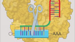 mRNA Knock-Down