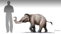 mini-mammoth-size-comparison