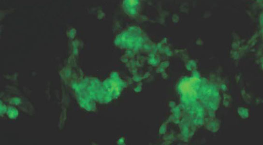 molecule that turns stem cells into heart cells