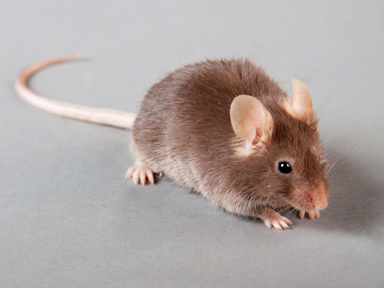 mouse-test