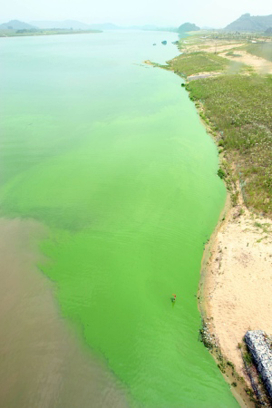 nakdong-river-south-korea-algal-bloom