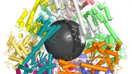nanoscale protein containers could aid drug, vaccine delivery