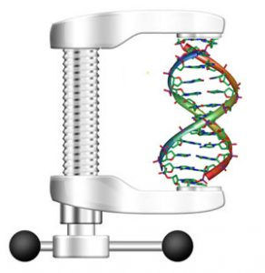 new algorithm that drastically reduces the time it takes to find a particular gene sequence in a database of genomes