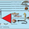 new family tree for ray-finned fish