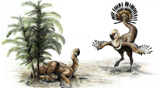 Dinosaurs Jurassic Stubby-Tailed Oviraptors Had Tails for Courtship Displays Oviraptor