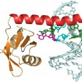 p65 protein with piece of telomerase RNA