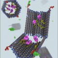 programmable DNA nanorobot