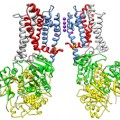 protein helps regulate cell communication pathway