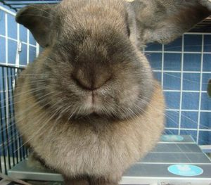 rabbit-whiskers