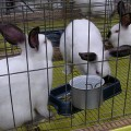 rabbits-in-cage