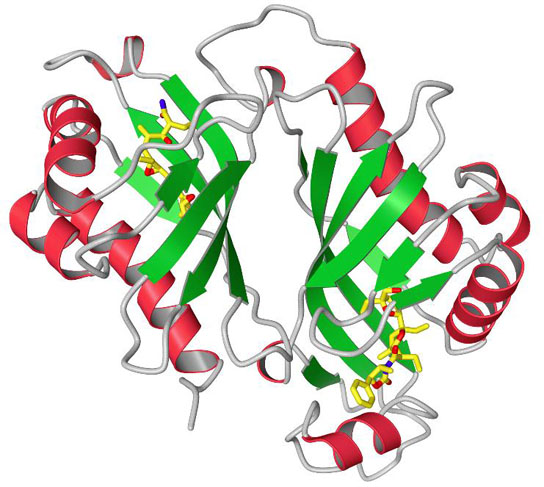 ribbon diagram of the protein Lsd19