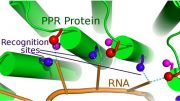 scientists have cracked a code underlying recognition of RNA molecules