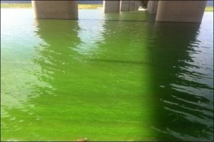 south-korea-algal-bloom